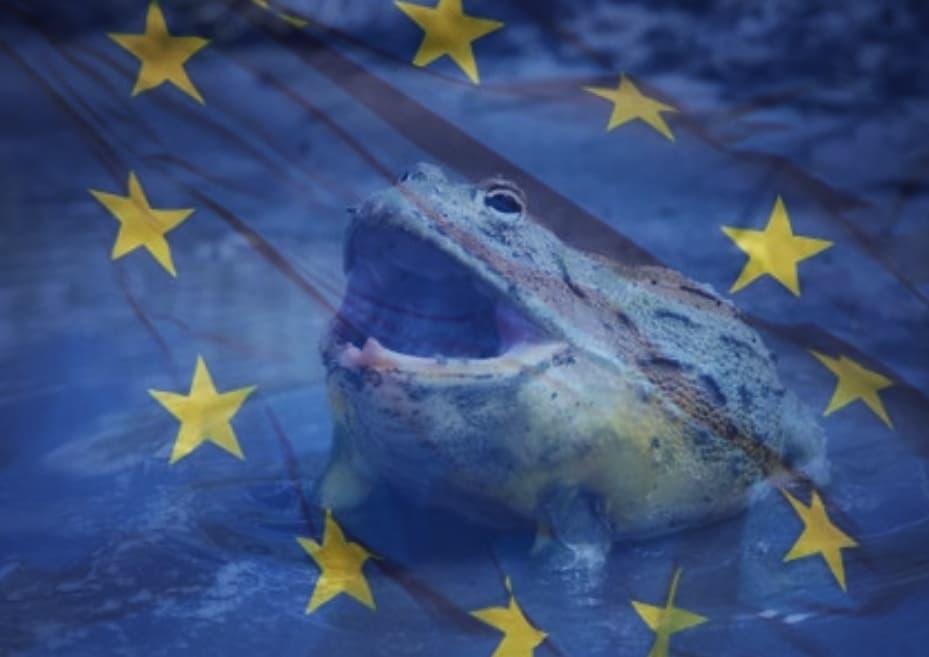 Жабите бик и блатото на европейската политика