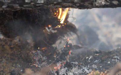 Трезво за пожарите в Сибир